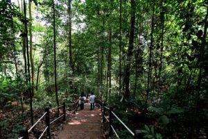 the-linq-at-beauty-world-bukit-timah-nature-reserve-singapore