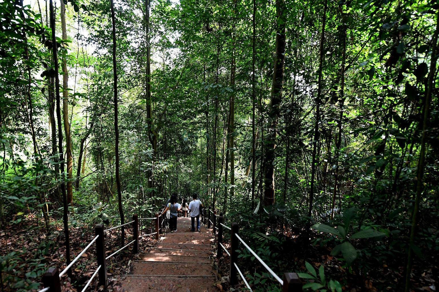 the-linq-at-beauty-world-bukit-timah-nature-reserve-singapore