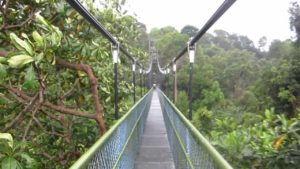 the-linq-at-beauty-world-macritchie-topwalk-singapore